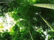 Фотопечать на потолке: Природа 14