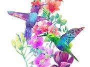 птицы (67)