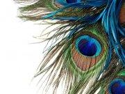 птицы (68)