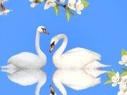 птицы (69)