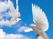 птицы (76)