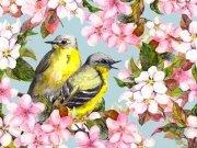 птицы (53)