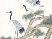 Фотопечать на потолке: Птицы 10