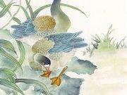 Фотопечать на потолке: Птицы 22