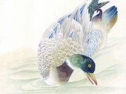 Фотопечать на потолке: Птицы 25