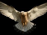Фотопечать на потолке: Птицы 29