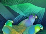 Фотопечать на потолке: Птицы 32