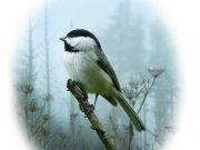 Фотопечать на потолке: Птицы 52