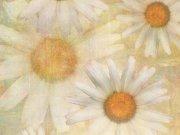 Фотопечать на потолке: Текстуры 8