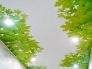 Коллаж из ветвей на матовом потолке в коридоре