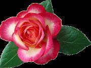 цветы (152)