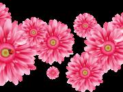 цветы (162)