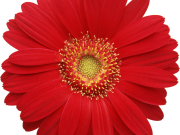 цветы (170)