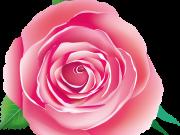 цветы (172)