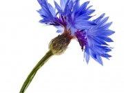 цветы (177)