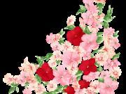 цветы (184)