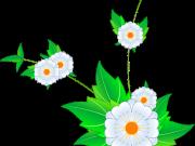 цветы (185)