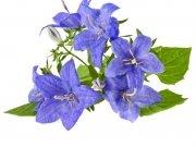 цветы (186)