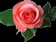 цветы (198)