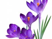цветы (213)