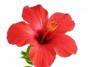 цветы (221)