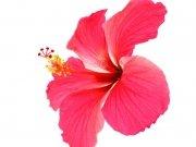 цветы (222)