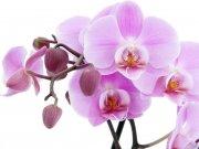 цветы (230)