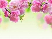 цветы (244)