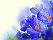 цветы (246)