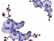 цветы (247)