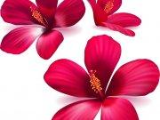 цветы (256)