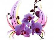 цветы (257)