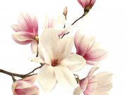 цветы (262)