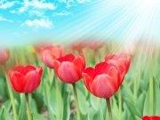 Фотопечать на потолке: Цветы 100