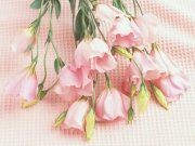 Фотопечать на потолке: Цветы 101