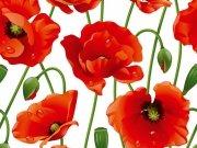 Фотопечать на потолке: Цветы 108