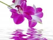 Фотопечать на потолке: Цветы 110