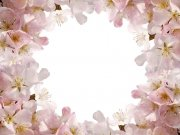 Фотопечать на потолке: Цветы 114