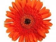 Фотопечать на потолке: Цветы 115