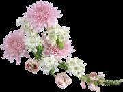 Фотопечать на потолке: Цветы 129