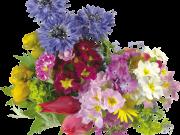 Фотопечать на потолке: Цветы 131