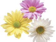 Фотопечать на потолке: Цветы 132