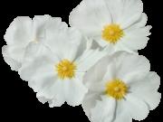 Фотопечать на потолке: Цветы 141