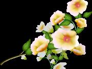 Фотопечать на потолке: Цветы 142