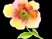 Фотопечать на потолке: Цветы 143