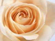 Фотопечать на потолке: Цветы 15