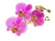Фотопечать на потолке: Цветы 27