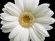 Фотопечать на потолке: Цветы 30