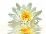 Фотопечать на потолке: Цветы 31