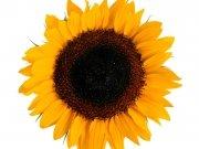 Фотопечать на потолке: Цветы 39